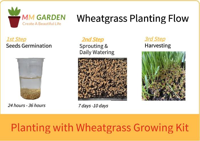Wheatgrass Planting Scheme