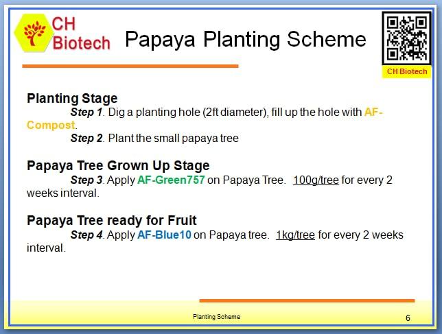 Papaya Planting Scheme