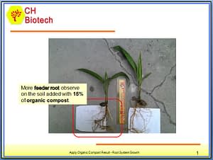 Root System Growth Exp.