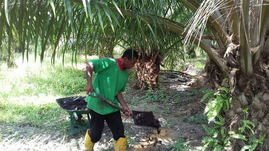 Work in Oil Palm Plantation
